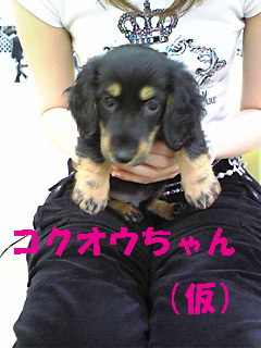 Kokuou_002_2