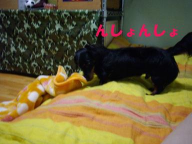 Alto_096