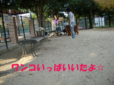 Alto_184