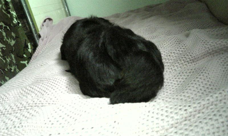 真っ黒い毛玉☆